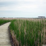 plante-eau-point-pelee-ponton